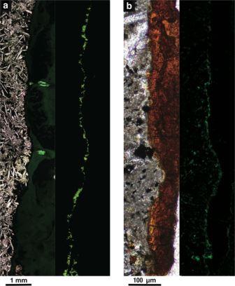 Образец породы, поднятый с глубины 122 метров ниже дна