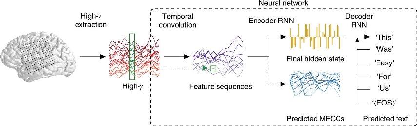 Схема распознавания — от сигнала в мозгу до слов, выданных нейросетью © Nature Neuroscience