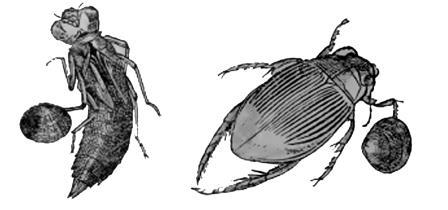 Улитки из Заполярья: ученые СПбГУ впервые за 130 лет провели перепись арктических моллюсков