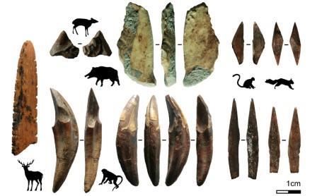 Некоторые из найденных в пещере наконечников и животные, которые добывались с их помощью © Langley et al., 2020