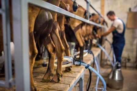 Козы могут стать живыми фабрикам и по производству моноклональных антител © Getty Images
