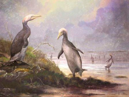Группа Copepteryx, плотоптеридных птиц, которые жили в Японии между 28,4 и 23 миллионами лет назад © Mark Witton