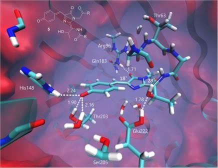 Модель промежуточного состояния хромофора и его взаимодействия с белковым окружением в ходе анаэробной фотоконверсии GFP © Frontiers in molecular biosciences