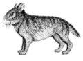 Предковое зайцеобразное © А.А. Гуреев