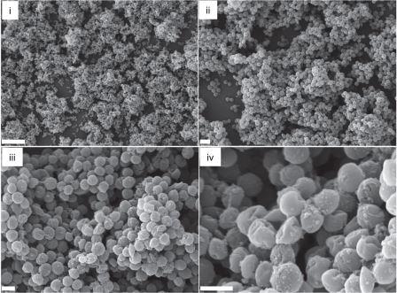 Сканирующая электронная микроскопия биопленки метициллинрезистентного золотистого стафилококка (MRSA)