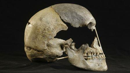 Череп из Златы Кун (Чехия) возрастом около 45 тысяч лет © Martin Frouz