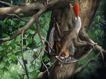 Реконструкция Kunpengopterus antipollicatus © Chuang Zhao