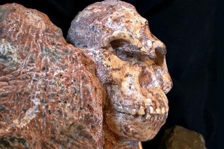 Окаменевший череп Литтл Фута © Ron Clarke