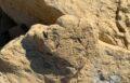 Самый маленький в мире след стегозавра, провинция Синцзян, Китай © Lida Xing