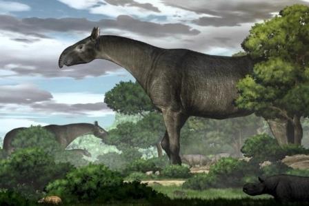 Реконструкция облика Paraceratherium linxiaense © Yu Chen