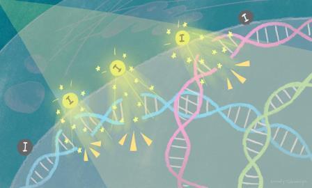 Схема работы наночастиц © Минди Такамия/Университет Киото iCeMS