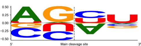 Выявленная учеными закономерность. Буквы, растущие вверх, соответствуют безошибочной обработке микроРНК, растущие вниз – паттерн обработки с ошибкой. Чем больше буква, тем сильнее связь.
