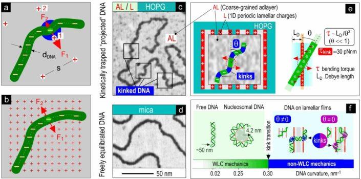 Схема изгибных конформационных аномалий ДНК на поверхности © Валерий Прохоров