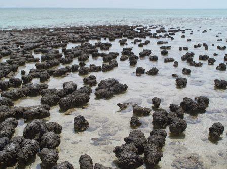 Строматолиты – одни из первых бактериальных сообществ © Getty images