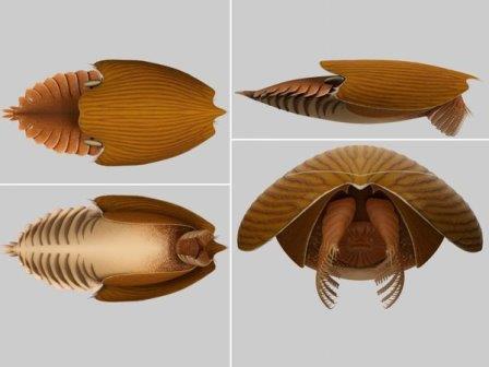Titanokorys gainesi © Jean-Bernard Caron, Joseph Moysiuk